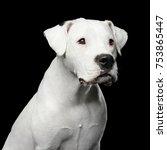 portrait of white dogo... | Shutterstock . vector #753865447