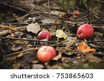 Decomposing Red Apples Fallen...