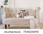 dog jack russell terrier sits... | Shutterstock . vector #754024093