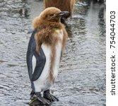 Comical Funny King Penguin...