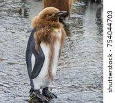 Comical Funny King Penguin...