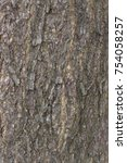 Small photo of Tree bark, Wood texture and background. Acacia mangium