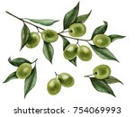 watercolor olive branch... | Shutterstock . vector #754069993
