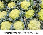 fresh cauliflower at the market.... | Shutterstock . vector #754092253