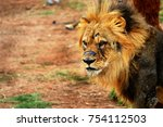a male lion with old scars | Shutterstock . vector #754112503