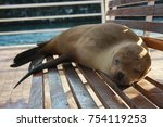 Sea Lions On Bench In Galapagos