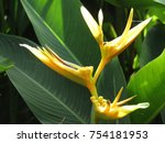 Stock photo flower in the nature flowers isolated flowers 754181953