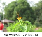 Stock photo butterfly on the flower isolated butterfly 754182013