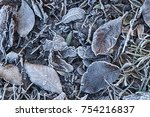 frosted leaves. hoarfrost. | Shutterstock . vector #754216837