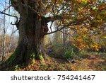 grand oak. latvia | Shutterstock . vector #754241467