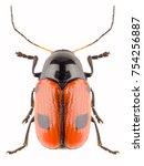 leaf beetle cryptocephalus... | Shutterstock . vector #754256887