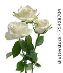 Stock photo bunch of white roses isolated on white background 75428704