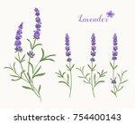 vector lavender illustration... | Shutterstock .eps vector #754400143