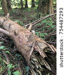 A Fallen Tree In The Forest