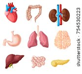 cartoon human internal organs... | Shutterstock .eps vector #754530223