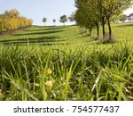 meadow field with row of trees... | Shutterstock . vector #754577437