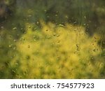 autumn rainy day behind window | Shutterstock . vector #754577923