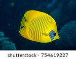 Small photo of Bluecheek butterflyfish, Chaetodon semilarvatus