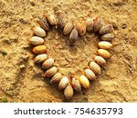 Small photo of Carpentaria acuminate seeds on the Sand
