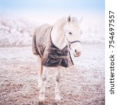White Horse Covered With Warm...