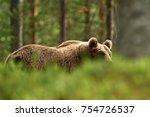 Brown Bear Walking Behind A...