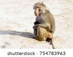 baboon with baby  | Shutterstock . vector #754783963