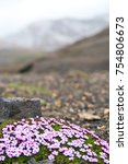 Small photo of Flowers survive alone in Icelandic landscape