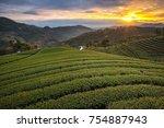 green tea field in morning... | Shutterstock . vector #754887943
