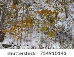 winter came  first snow. wet... | Shutterstock . vector #754910143