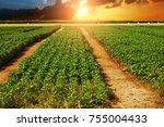 a green basil field against... | Shutterstock . vector #755004433