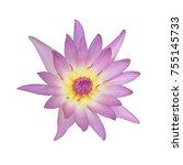 purple lotus isolated on white... | Shutterstock . vector #755145733