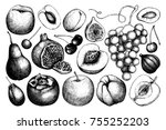 vintage fruits and berries  ... | Shutterstock .eps vector #755252203