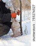 Gardener Protecting Fruit Tree...