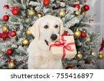 golden retriever dog holding a... | Shutterstock . vector #755416897