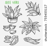 sketch of aloe vera in pot and... | Shutterstock .eps vector #755455117
