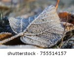 frosted leaf surface texture....   Shutterstock . vector #755514157
