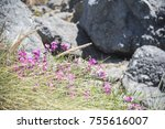 Wildflowers Growing On Rocky...