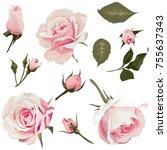 Realistic Roses Vector Clip Ar...