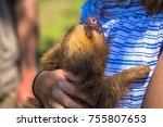 Tourist Holding A Baby Sloth I...