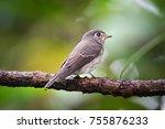beautiful bird asian brown... | Shutterstock . vector #755876233