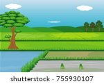 paddy field vector design | Shutterstock .eps vector #755930107