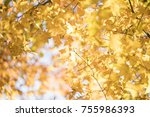 autumn beautiful maple leaves... | Shutterstock . vector #755986393
