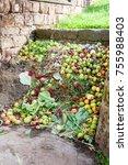 Tas De Compost D'un Jardin...