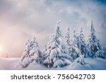 fabulous frozen fir trees.... | Shutterstock . vector #756042703
