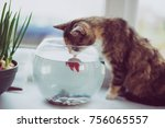 Cat Looking At A Fish In An...