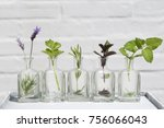 bottle of essential oil with... | Shutterstock . vector #756066043