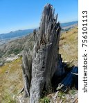 old tree stump from the 1980's...   Shutterstock . vector #756101113