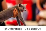 beautiful grey cat with emerald ... | Shutterstock . vector #756108907