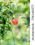 red apples on a tree | Shutterstock . vector #756140377