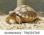 close up african spurred... | Shutterstock . vector #756231763